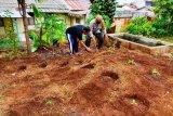 Polsek Jayapura Utara beri bantuan bibit sayur ketahanan pangan