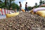 Petani mete di Muna masih dihantui tengkulak jelang panen