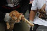 Polisi tangkap seorang perempuan bunuh kucing untuk konsumsi