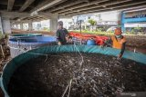 Pemprov DKI Jakarta dorong warga kembangkan perikanan sistem bioflok