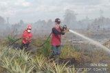 Ada kebakaran hutan di dekat  konsesi Sinarmas
