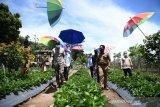 Kelurahan Kuala Pembuang I berpotensi kembangkan destinasi agrowisata