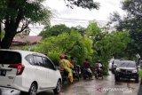 Puluhan titik gangguan listrik di Kupang akibat cuaca ekstrem