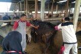 151 siswa SMK PP Negeri Padang Mengatas ikuti uji kompetensi profesi bidang peternakan