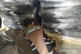 Bintan perluas pasar ekspor produk olahan kelapa