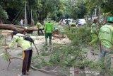 Mobil tertimpa pohon tumbang bisa ajukan klaim asuransi