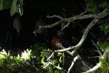 Puluhan rumah rusak akibat puting beliung di Lombok Barat