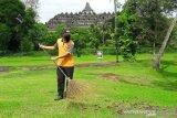 Sejumlah wisatawan kecele datang di Borobudur