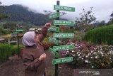 Pemkab Aceh Tengah gandeng PKK kembangkan agrowisata taman bunga dan kebun sayur