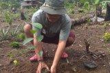 LP3L ajak warga  tanam pohon untuk lestarikan alam