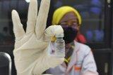 15.640 vaksin Sinovac  tahap dua tiba di Sulsel