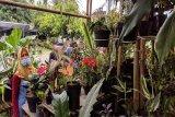 Pekalongan, sentra  bibit buah dan tanaman hias di Lampung