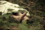 Polisi selidiki temuan jenazah bocah dalam karung