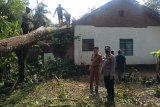 Dua desa di Pasir Sakti Lampung Timur diterjang angin kencang