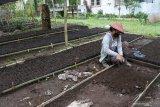 Pekerja memasukkan media tanam ke wadah pot atau polybag bibit pohon di persemaian di Bagian Kesatuan Pemangkuan Hutan (BKPH) Sukosari, Kesatuan Pemangkuan Hutan (KPH) Perhutani Bondowoso, Jawa Timur, Rabu (10/2/2021). KPH Perhutani Bondowoso yang meliputi Kabupaten Situbondo dan Bondowoso mengembangankan persemaian bibit pohon, seperti suren atau surian, pinus, kopi, durian, pete, dan akasia. Antara Jatim/Seno/zk