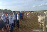 Mentan : Peternakan sapi di Sukamara sangat berpotensi dikembangkan