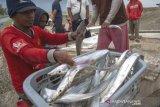 Ikan layur untuk pasar ekspor
