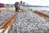 Produksi ikan teri di Palu