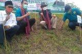 Unram menginisiasi gerakan menanam hijauan pakan ternak di Lombok Utara