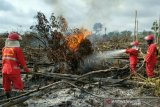 Tim gabungan padamkan lahan gambut terbakar di  Musi Banyuasin