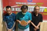 Penyeludupan pil koplo dalam bumbu pecel digagalkan petugas Rutan Medaeng Surabaya