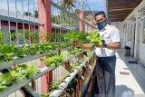Narapidana Lapas Talu diberdayakan menanam sayuran hidroponik