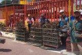 Penjual burung pipit pasrah  omset turun 50 persen saat Imlek