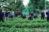 JBI tanam 100.000 bibit pohon di sembilan  kabupaten/kota di Sumsel