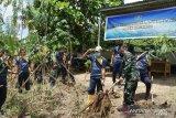 Danlantamal VIII lakukan panen singkong di lahan ketahanan pangan