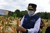 Pemprov Sulsel siapkan bibit udang windu gratis bagi petani tambak