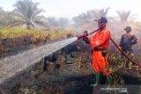 Sumber air jadi kendala pemadaman perkebunan sawit di Agam