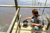 Warga keluhkan tumpahan BBM di Sungai Mentaya