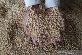 Harga kedelai impor di Kudus kembali naik menjadi Rp9.800/kilogram