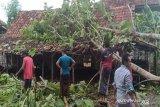 Hujan disertai angin kencang menumbangkan puluhan pohon di Bantul