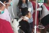 KKB aniaya ibu rumah tangga di distrik Bioga Kabupaten Puncak