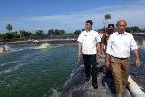 Pemkab Padang Pariaman pastikan tertibkan tambak udang vaname tidak kantongi izin