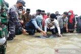Gubernur Jatim Khofifah  lepas ikan paus terdampar di Pantai Modung