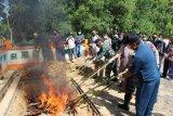 Balai KIPM KKP musnahkan ikan ilegal dari Malaysia