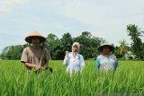 Beasiswa Bidikmisi antar anak petani ini jadi calon dokter