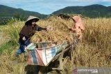Dinas Pertanian Kota Solok harapkan pengurus Kopediperta lebih maju lagi