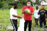 Pemprov Sulut optimalkan sektor pertanian dorong pertumbuhan ekonomi