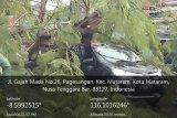 Pohon tumbang timpa mobil di Jalan Gajahmada Mataram