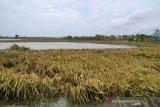 BMKG imbau waspadai potensi banjir di sejumlah daerah