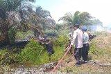 29,5 hektare lahan kebakaran di Agam kerugian capai ratusan juta