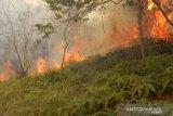Sejak Februari, lima kawasan hutan di Batam terbakar