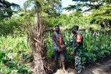Babinsa Koramil Wamena komunikasi sosial dengan warga binaan