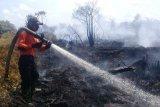 Api yang membakar lahan perkebunan di Agam dipadamkan oleh hujan