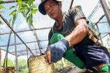 BNF canangkan penanaman sejuta pohon di Hutan Sebangau
