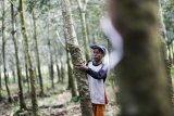 Harga karet di Sumatera Selatan  terus naik