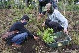 Petani penggarap lahan milik Perhutani menanam bibit pohon di kawasan hutan produksi Petak 98, Desa Jampit, Ijen, Bondowoso, Jawa Timur, Kamis (25/2/2021). Perhutani Kesatuan Pemangkuan Hutan (KPH) Bondowoso dan petani menanam 8 ribu bibit pohon, seperti Makadamia, Suren, Sengon, Sirsat, Apokat dan Nangka untuk mencegah terjadinya longsor dan banjir di kawasan Ijen. Antara Jatim/Seno/zk.